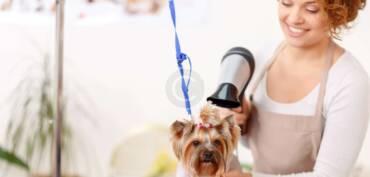 Alimentos que debe evitar su mascota