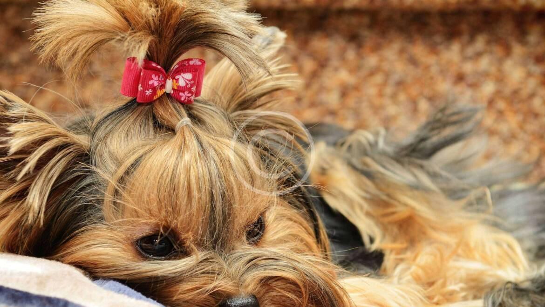 Cómo cuidar a tu perro