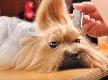 Peinados de moda para tu perro