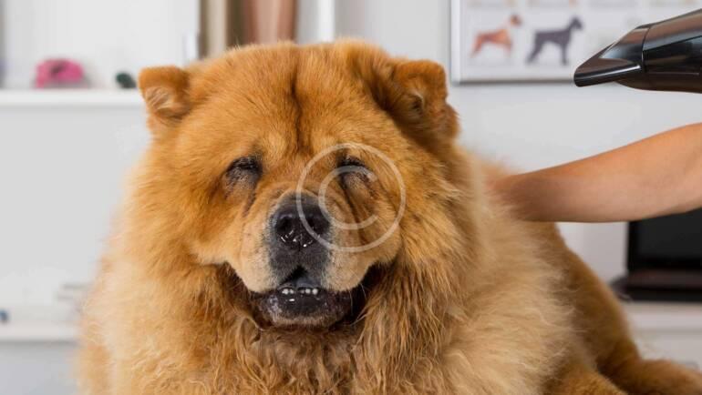 Cómo mantener brillante el pelaje de un perro