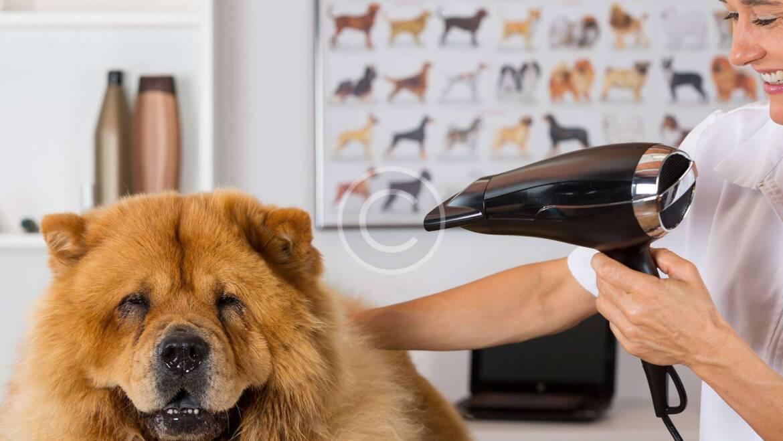Los 5 mitos principales del comportamiento de los perros