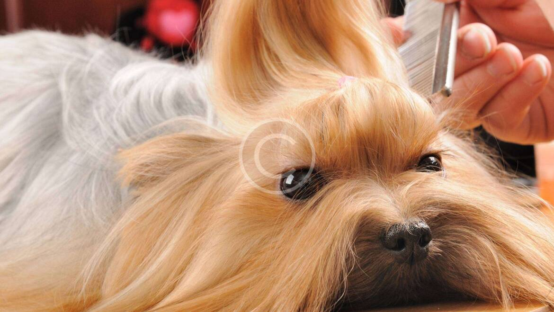 Cómo hacer que las mascotas adoren las visitas al veterinario