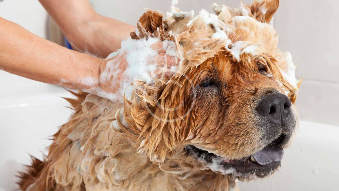 Ways to Make Your Home Safe for Your Pets