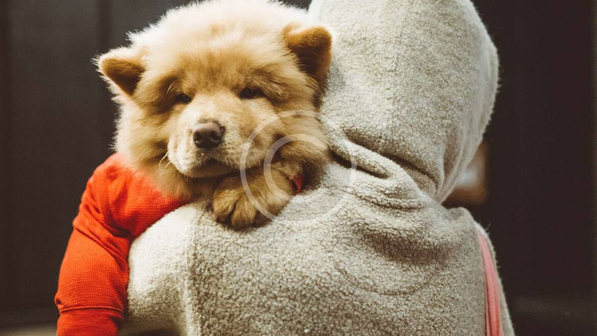 5 Ways Your Dog Shows Affection For You